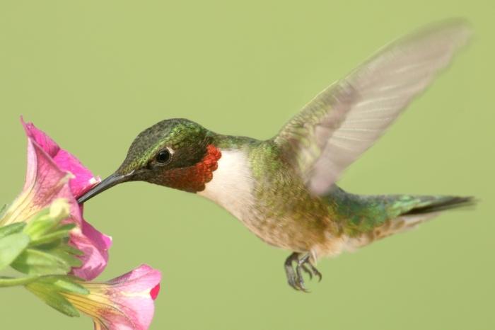 Hummingbird6.2.16